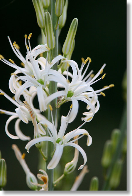 The Soap Plant
