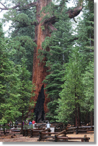 The Grizzly Giant, Mariposa Grove of Giant Sequoias, Yosemite