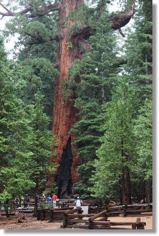 Yosemite Hikes The Mariposa Grove Of Giant Sequoias