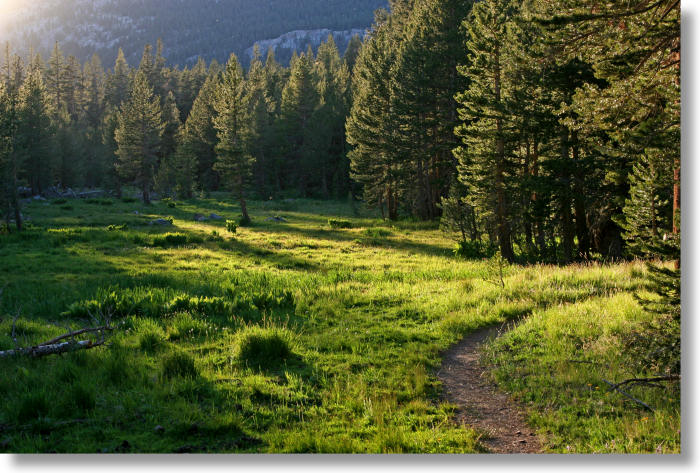 meadow along the Mono Pass trail in Yosemite Park at sunset